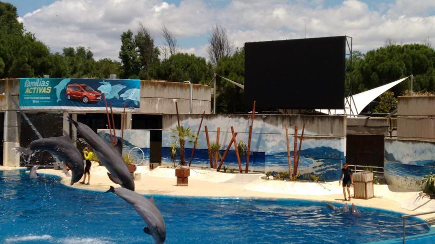 Instalación Pantalla de Vídeo en el Delfinario del Zoo Aquarium de Madrid